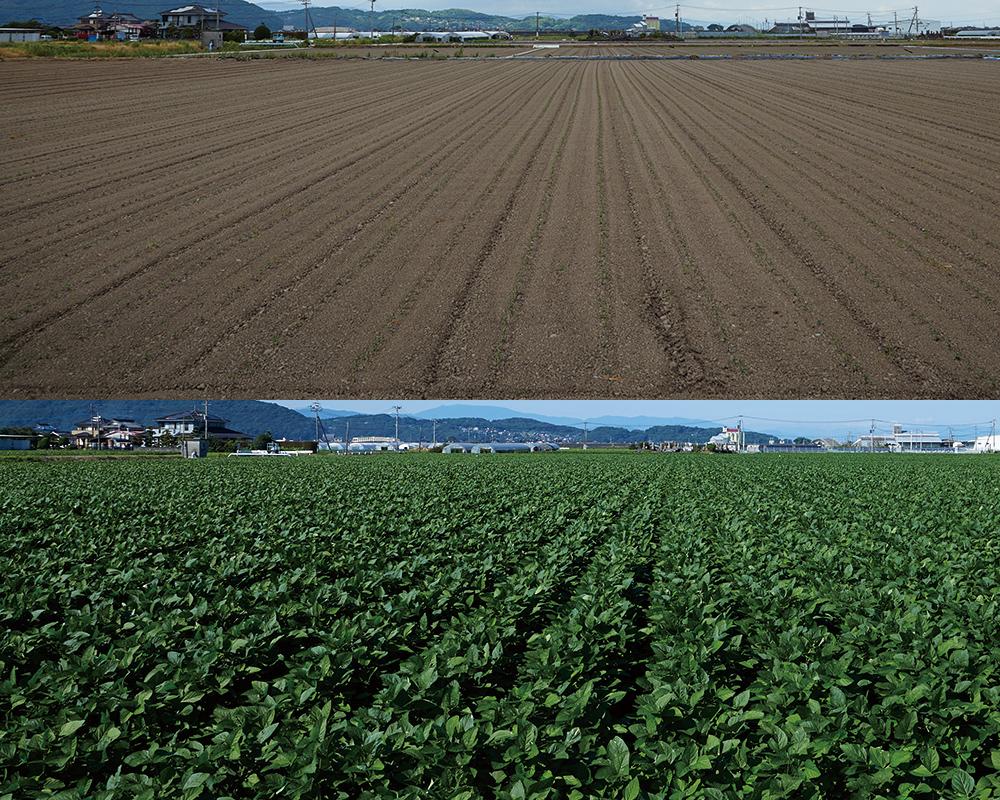 佐賀県鹿島市の大豆農家