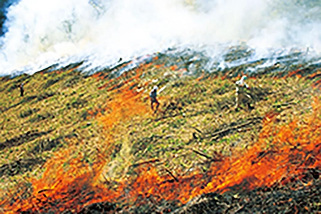 焼畑の様子