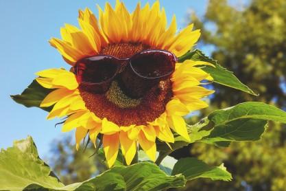 glasses-3477664_1920